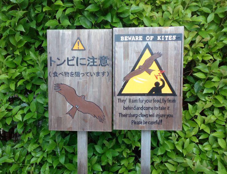 Upozorenje na ptice koje kradu hranu i moguće povređivanje  Foto: Dnevnik.rs/N. Pisarev