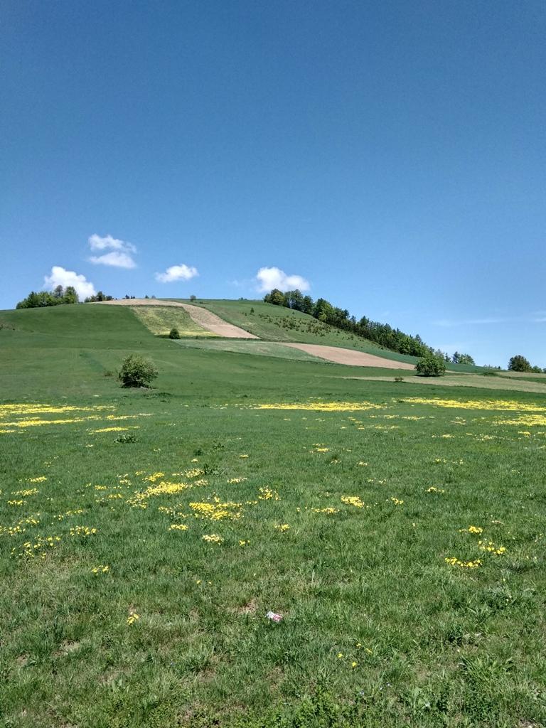 Cvetne livade planine Muchanj F M. Jablanov