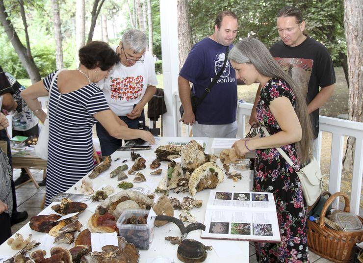 Izložba gljiva u Dunavskom parku  Foto:Dnevnik.rs/ R. Hadžić