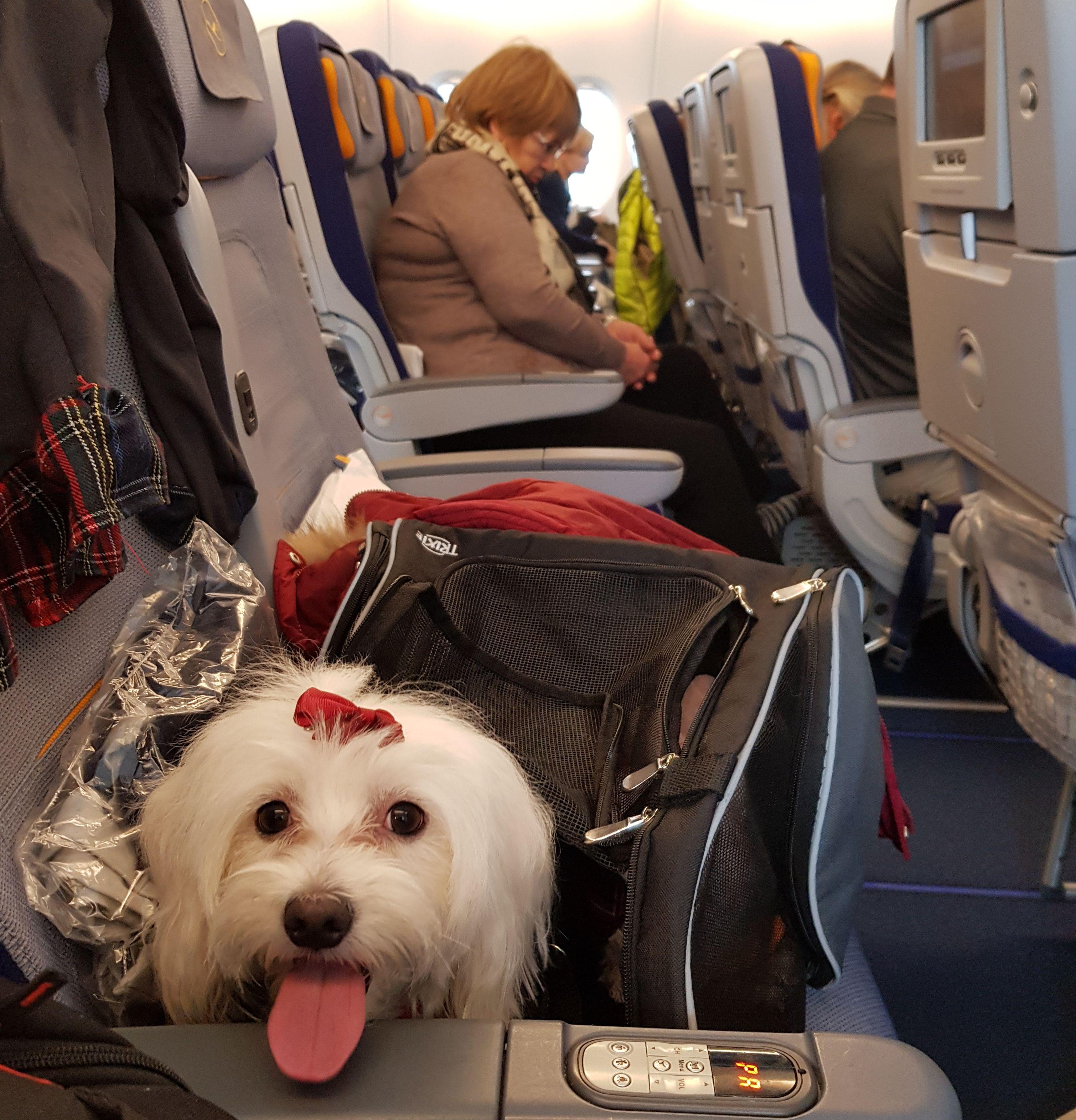 Mila u avionu