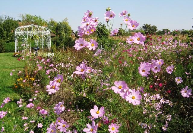 vrt cvece