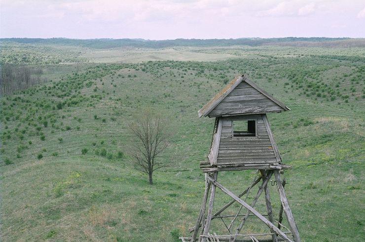 """""""Evropska Sahara"""" vojvođanske ravnice Foto:  JP """"Vojvodinašume"""""""