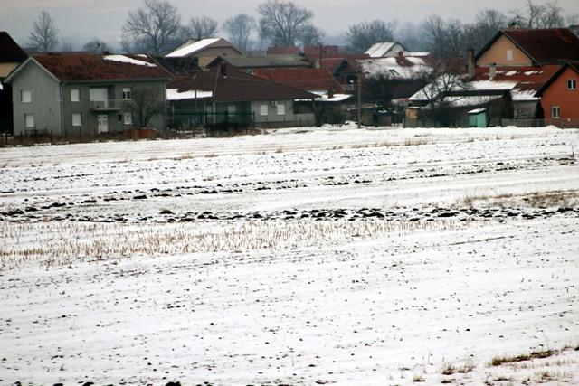 psenica sneg
