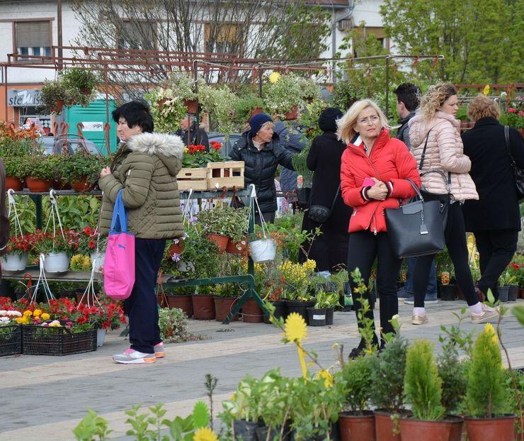 Prva prolećna Novosadska cvetna pijaca Foto: V. Fifa