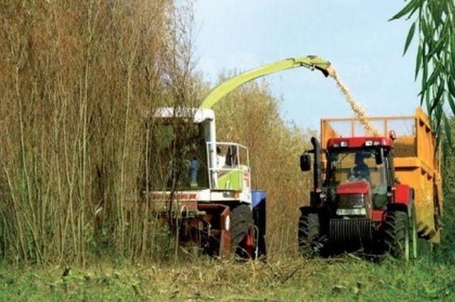 Žetva vrbe donosi 30–40 tona biomase po hektaru Foto: Youtube/printscreen