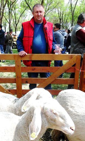 Čaba Boršoš iz Adorjana ima najbrojnije stado ovaca virtemberg u srbiji Foto: M. Mitrović