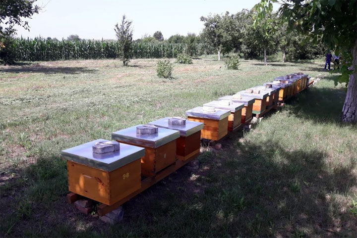 Košnice sa pčelama kod Kikinde/Pokrajinska vlada
