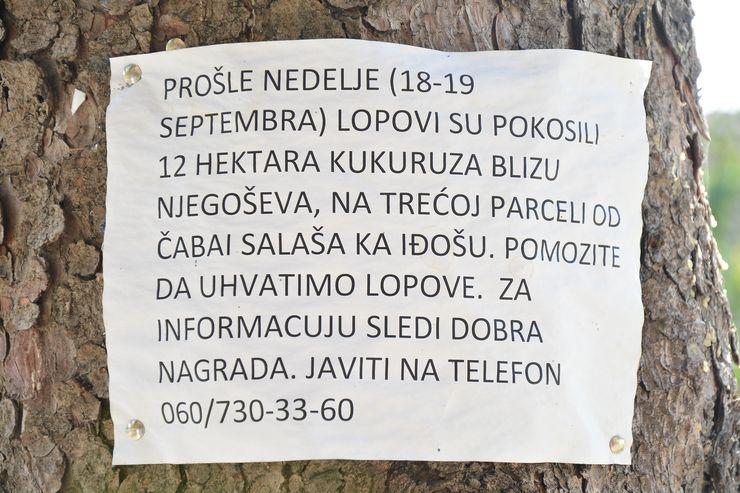 Oglas koji poziva čitaoce da pronađu lopova Foto: Vanja Fifa