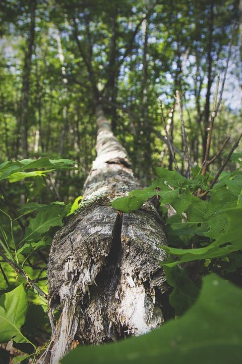 palo drvo, pixabay