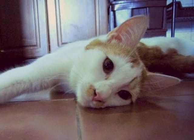 David, mačak Foto: Dnevnik.rs