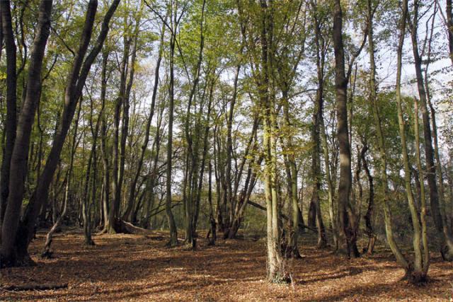Sume u Vojvodini