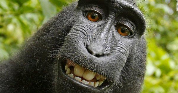 Ćubasti makaki Foto: Youtube/Printscreen