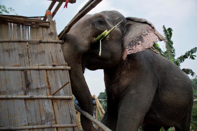 slon indija tanjug