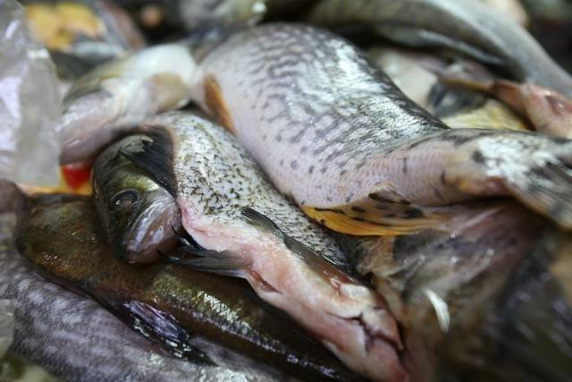 Rečna riba, posna trpeza Foto: Dnevnik.rs/F. Bakić