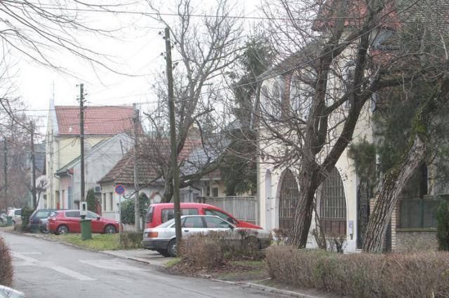 Salajka  Foto:Dnevnik.rs/ B. Lučić
