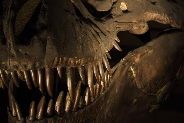 dinosaurus, pixabay