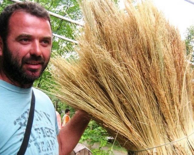 Jovan Grujin iz Bogaraša odustao od repe, ostaje veran sirku metlašu Foto: Dnevnik.rs/M. Mitrović