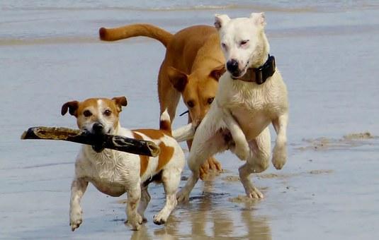 ljubimci psi pixabay