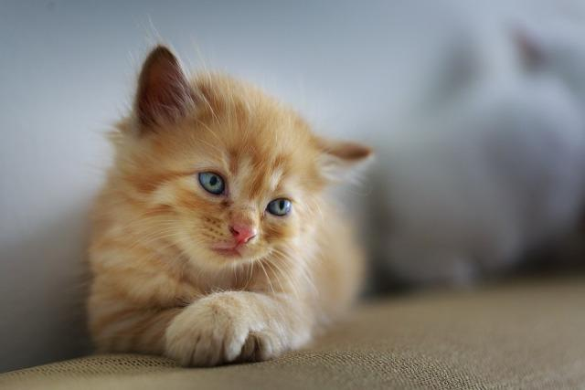 macka ljubimci