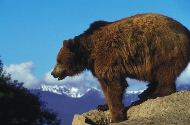grizli