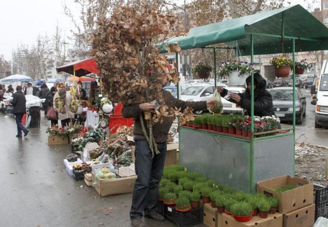Novosađani počeli pripreme za božićne praznike Foto: R. Hadžić