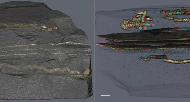 Fosili stari 2,1 milijardu godina Foto: A. El Albani / IC2MP / CNRS - Université de Poitiers
