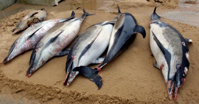 mrtvi delfini