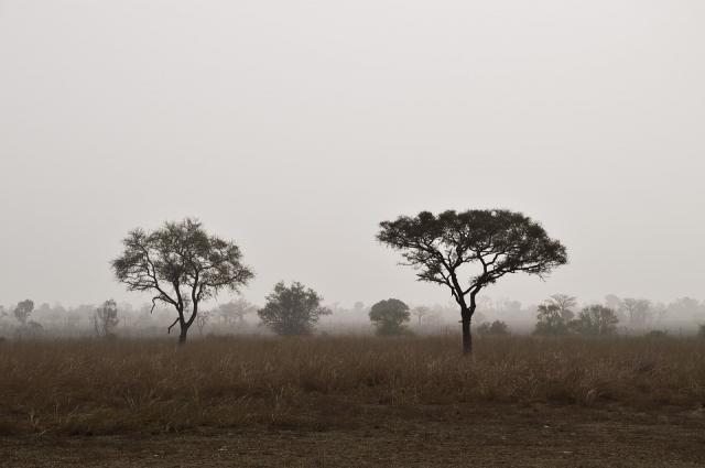 savana afrika, pixabay