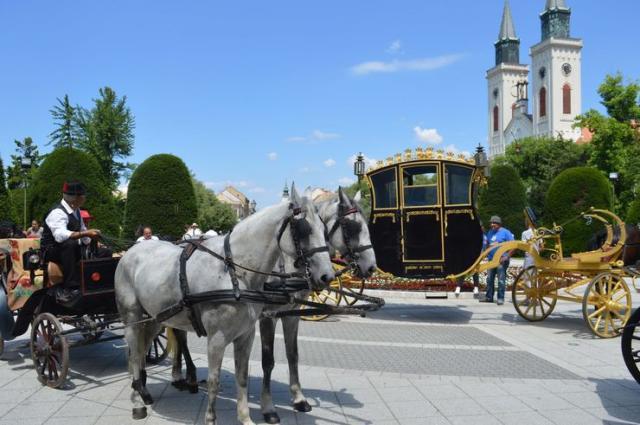 motra konjskih zaprega na trgovima i centralnim ulicama Sombora Foto: Dnevnik.rs