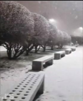 sneg argentina