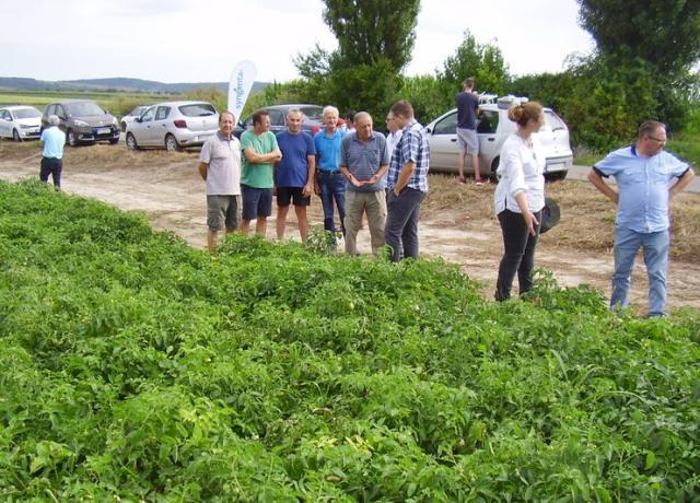 Na skupu proizvođača paradajza u Čalmi Foto: R. Hadžić