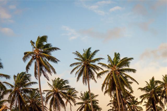 palme, pixabay.com