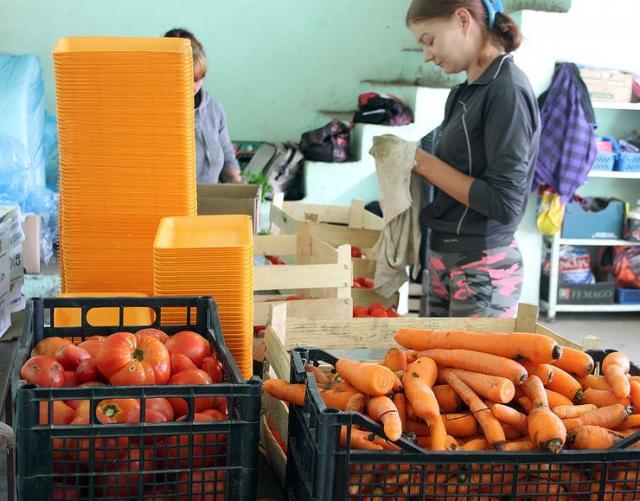 Porodica Vozar iz Kisača već 30 godina bavi se organskom proizvodnjom povrća Foto: F. Bakić