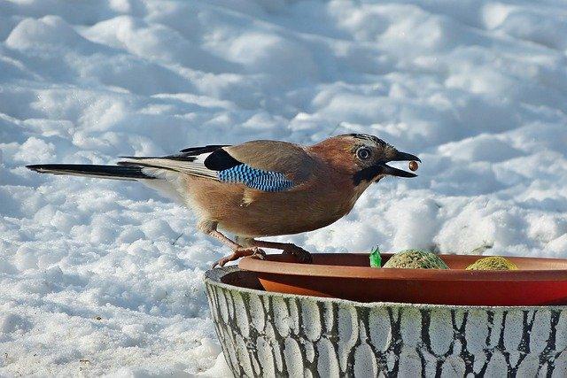 ptica zima, pixabay
