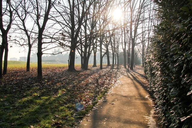 sunce zima