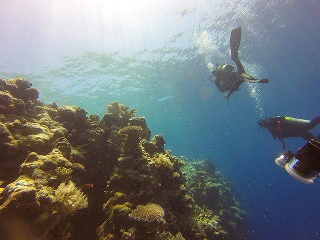 korali, pihabay