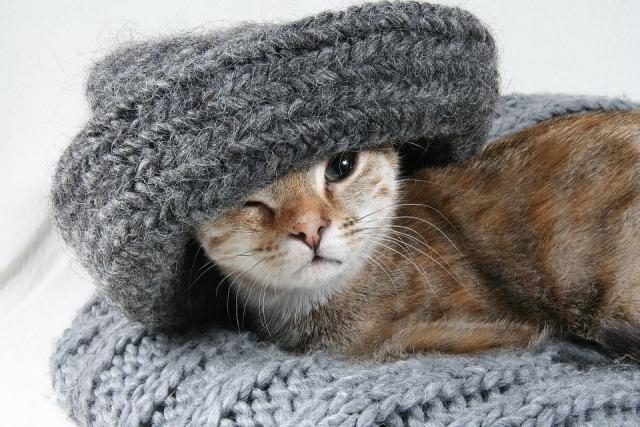 hladno macka zima pixabay