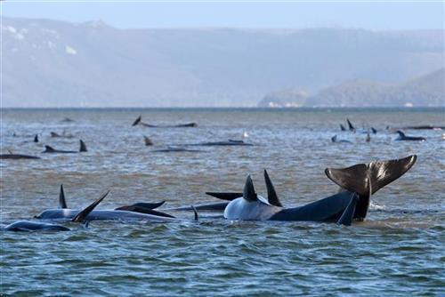 kitovi tanzanija