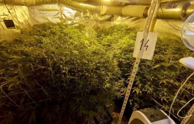 Otkrivena laboratorija marihuane Foto: MUP Srbije