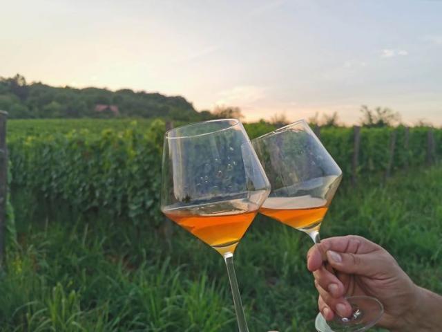 Bakarno vino od sivog pinoa, sada vino broj jedan u vinariji Bojana Baše Foto: privatna arhiva