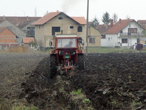 oranje Foto: Dnevnik.rs/S. Šušnjević